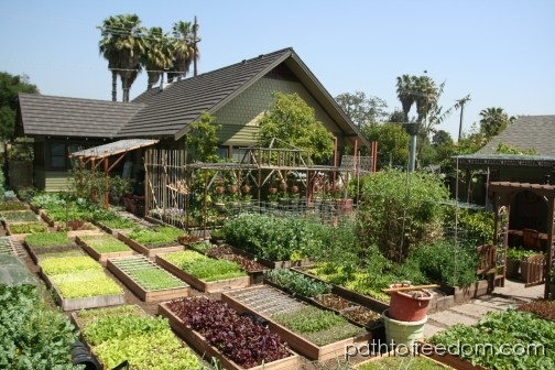 60 000lbs of organic food per acre off grid world for Garden design 1 acre