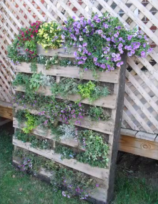 vertical pallet garden with feet 3