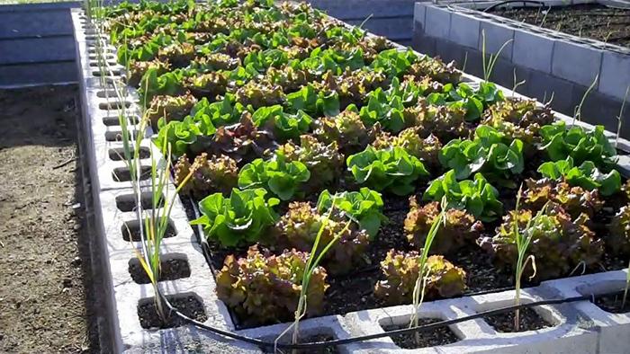 Garden Leaf Blocks : Amazing cinder block raised garden beds off grid world