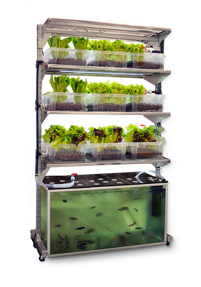 Diy Kitchen Aquaponic System Grows A Meal A Day Off Grid