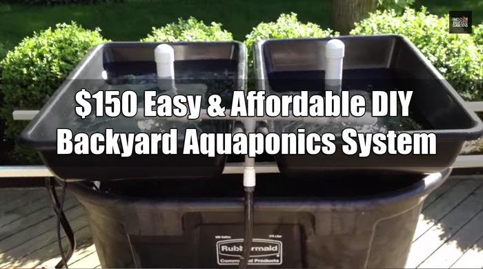 Indoor Aquaponics System Designs